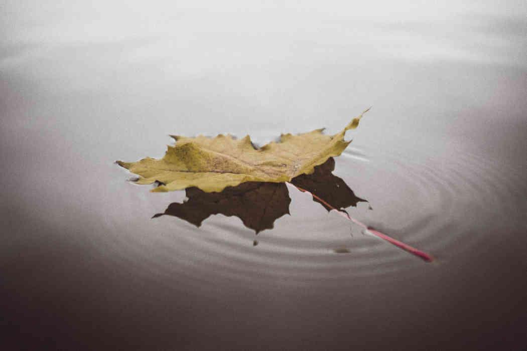 Tranquility worship leaf